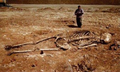 Szkielet giganta w porównaniu do człowieka